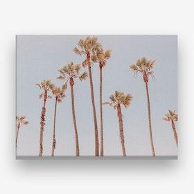 Palms Summer Canvas Print