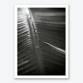 Botanical 1  Banana Leaf Art Print
