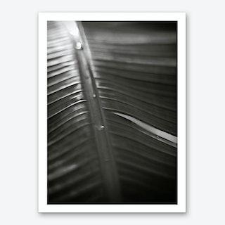 Botanical 1  Banana Leaf Art Print