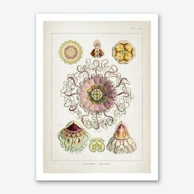 Vintage Haeckel 2 Tafel 38 Art Print