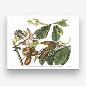 Yellow Billed Cuckoo Canvas Print