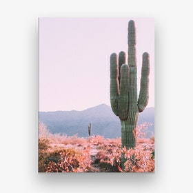 Desert Cactus Pink Canvas Print