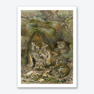 Vintage Brehm 1 Tiger Art Print
