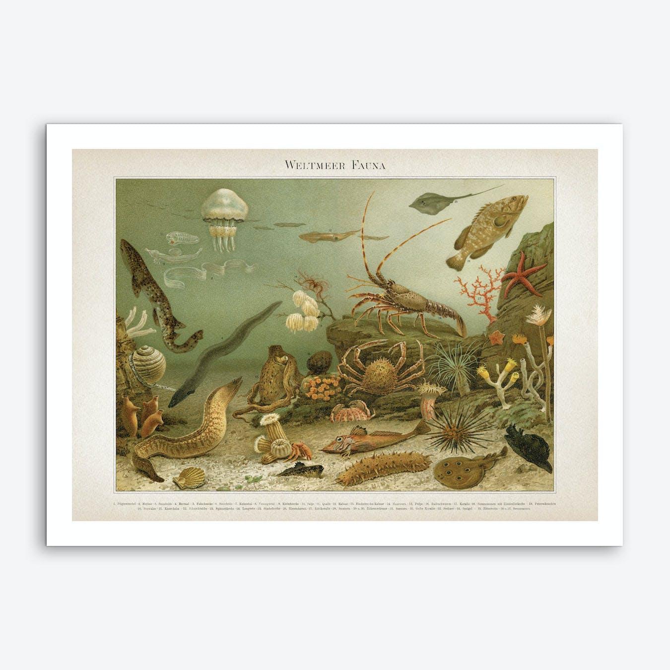 Vintage Meyers 4 Weltmeer Fauna Art Print