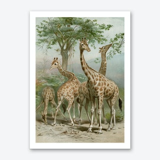Vintage Brehm 1 Giraffe Art Print