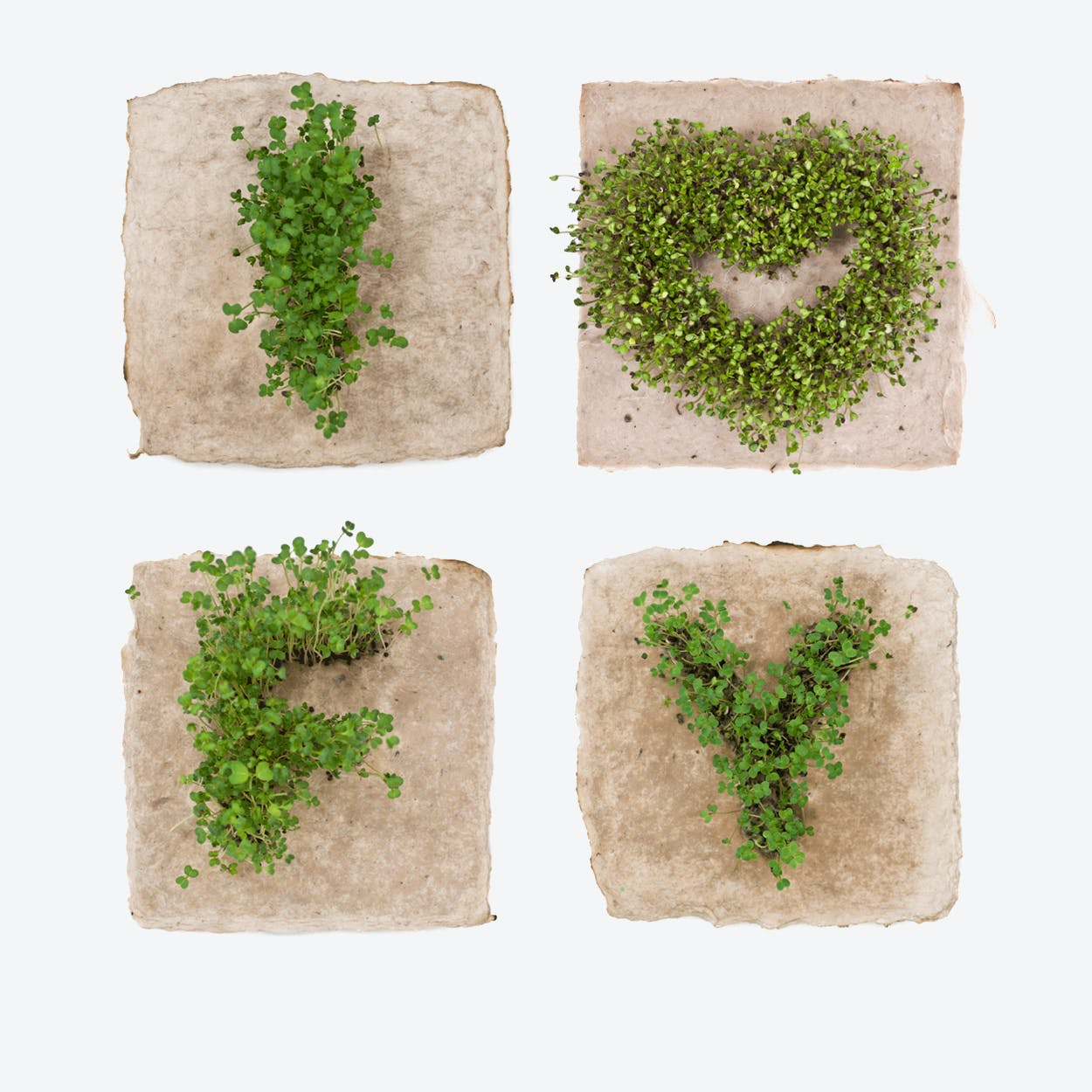 Plant Growing Paper (I <3 FY)