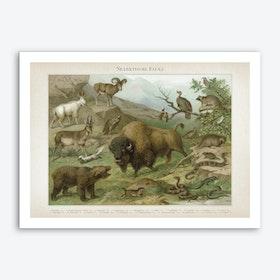 Vintage Meyers 4 Nearktische Fauna Art Print
