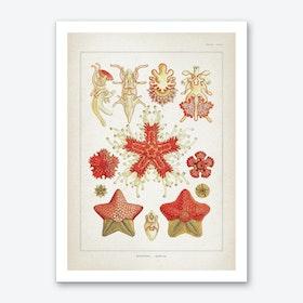 Vintage Haeckel 2 Tafel 40 Art Print