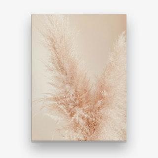Pampa Grass I Canvas Print