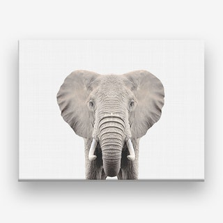 Elephant X Canvas Print