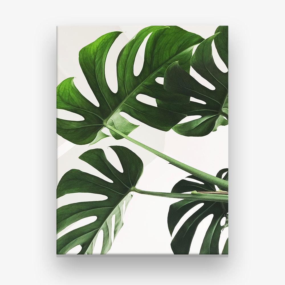 Monstera Leaves Photo Canvas Print