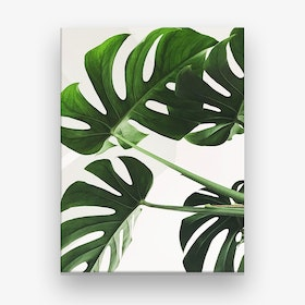 Monstera Leaves Photo Canvas Print
