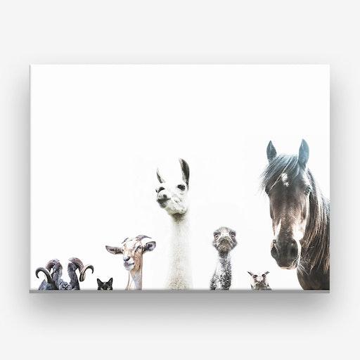 Animal Crew Canvas Print