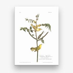 Children's Warbler Canvas Print