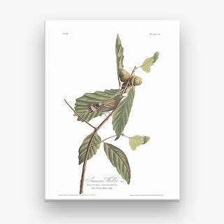 Swainson's Warbler Canvas Print