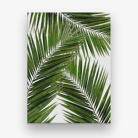 Palm Leaf III Canvas Print