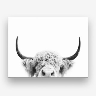 Peeking Cow  Canvas Print