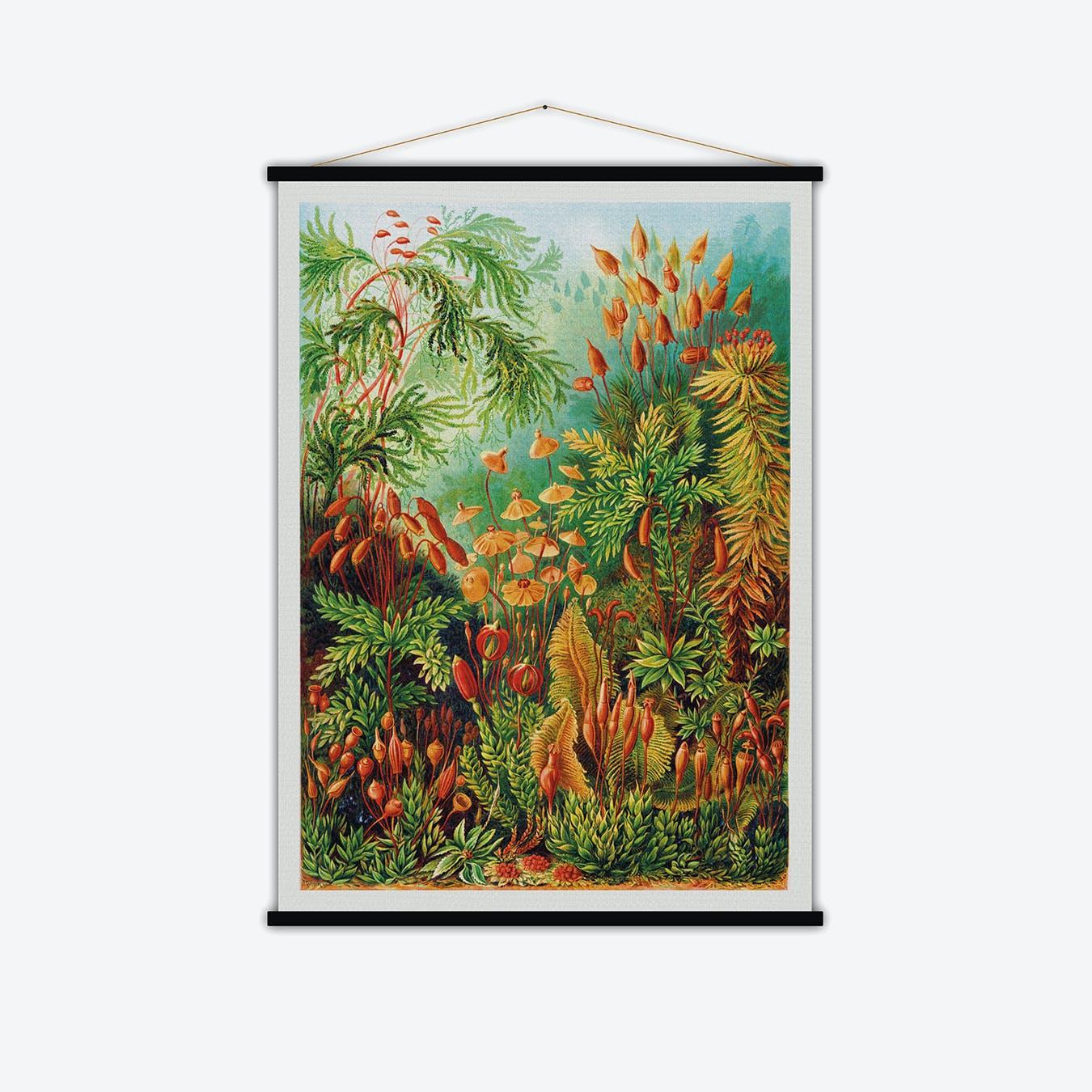 Muscinae Vintage Print