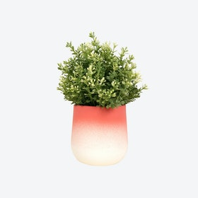 Red FlowerTop Planter – Medium