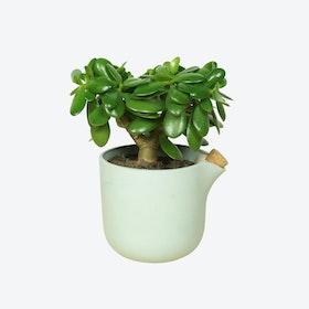 Green Natural Balance Flowerpot