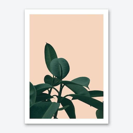 Terracotta Plant Art Print