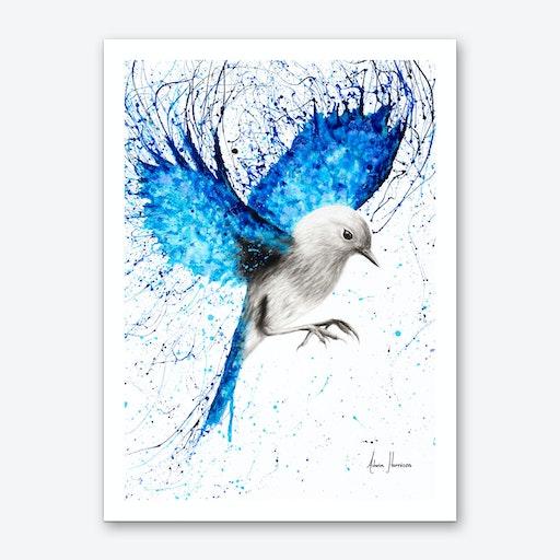 Mediterranean Wings