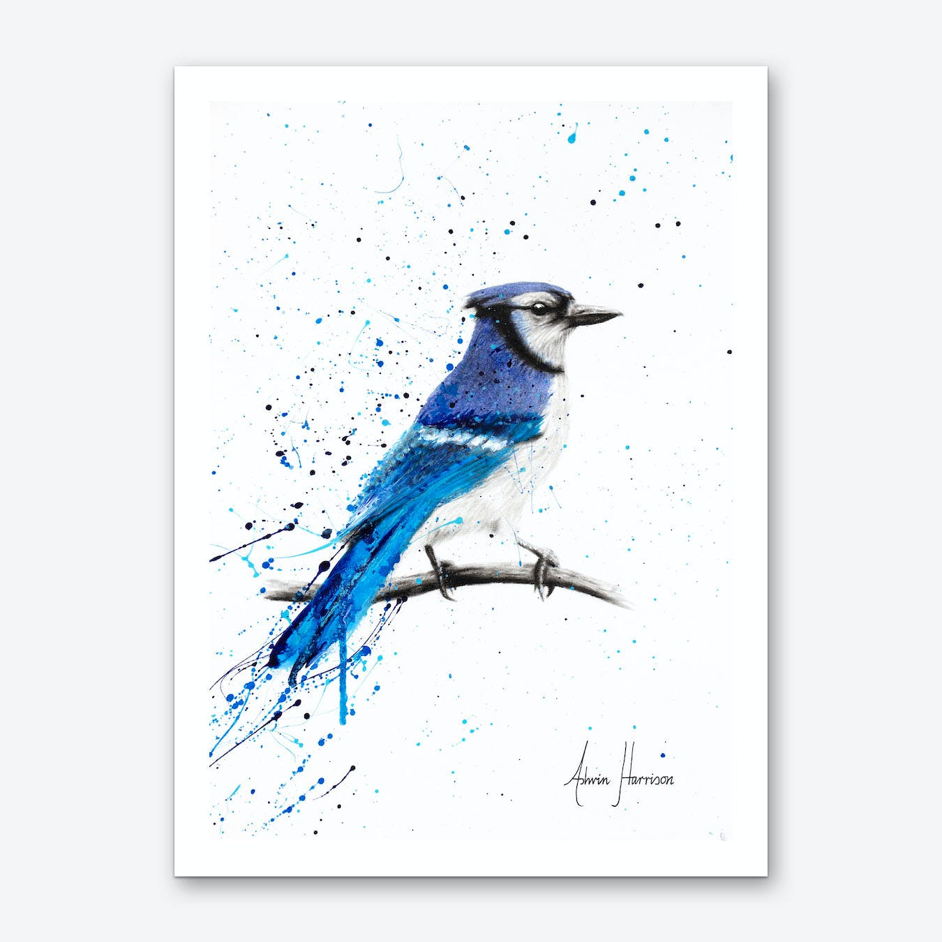 Blue Jay Sunday