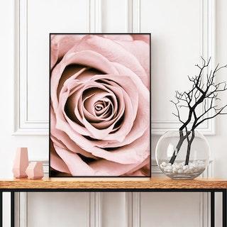 Blush Rose Art Print