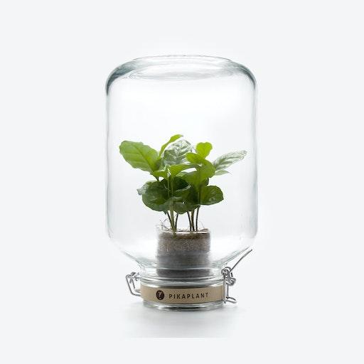 PikaPlant Jar - Coffea Arabica