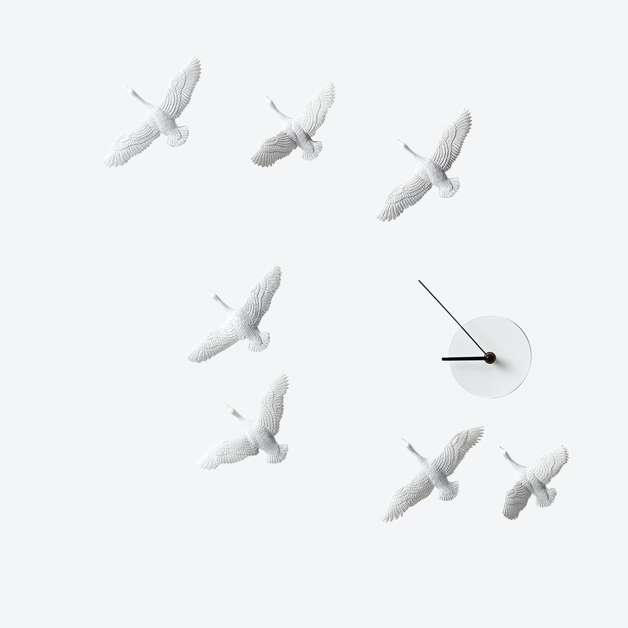 Migrantbird X Clock - C Formation