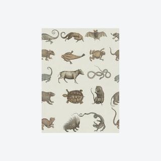 Seba's Ark Wallpaper