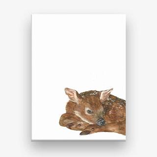 Shy Fawn Canvas Print