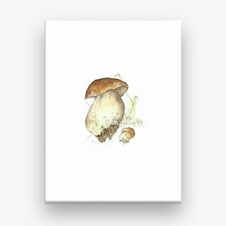 Miniature Toadstool 3 Canvas Print