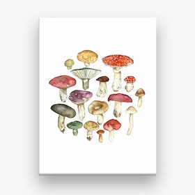 Wild Meadow Toadstools Canvas Print