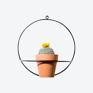 Circle Wall Planter - Black