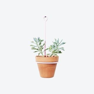 Tear Drop Planter - Pink