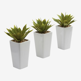 Mini Agave Plants with Planters - Green - Set of 3