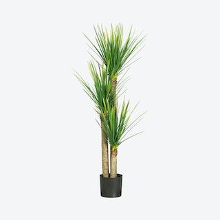 Yucca Tree - Green