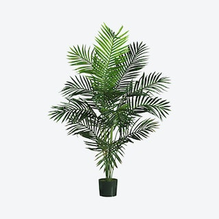 Paradise Palm Tree - Green