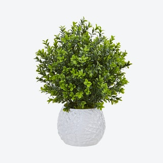 Indoor / Outdoor Boxwood in Vase - Green