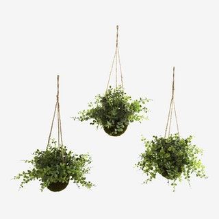 Eucalyptus, Maiden Hair and Berry Hanging Basket - Green - Set of 3