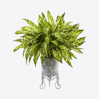 Aglaonema with Planter - Green