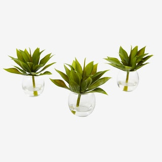 Agave Succulent Plants with Vases - Green - Set of 3