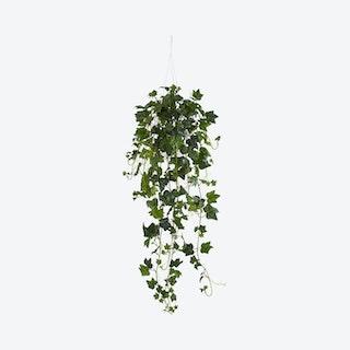 English Ivy Bush Hanging Basket - Green