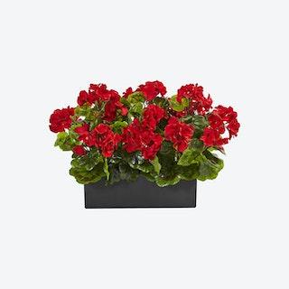 Indoor / Outdoor UV Resistant Geranium in Planter - Red