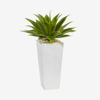 Agave in Planter - Green