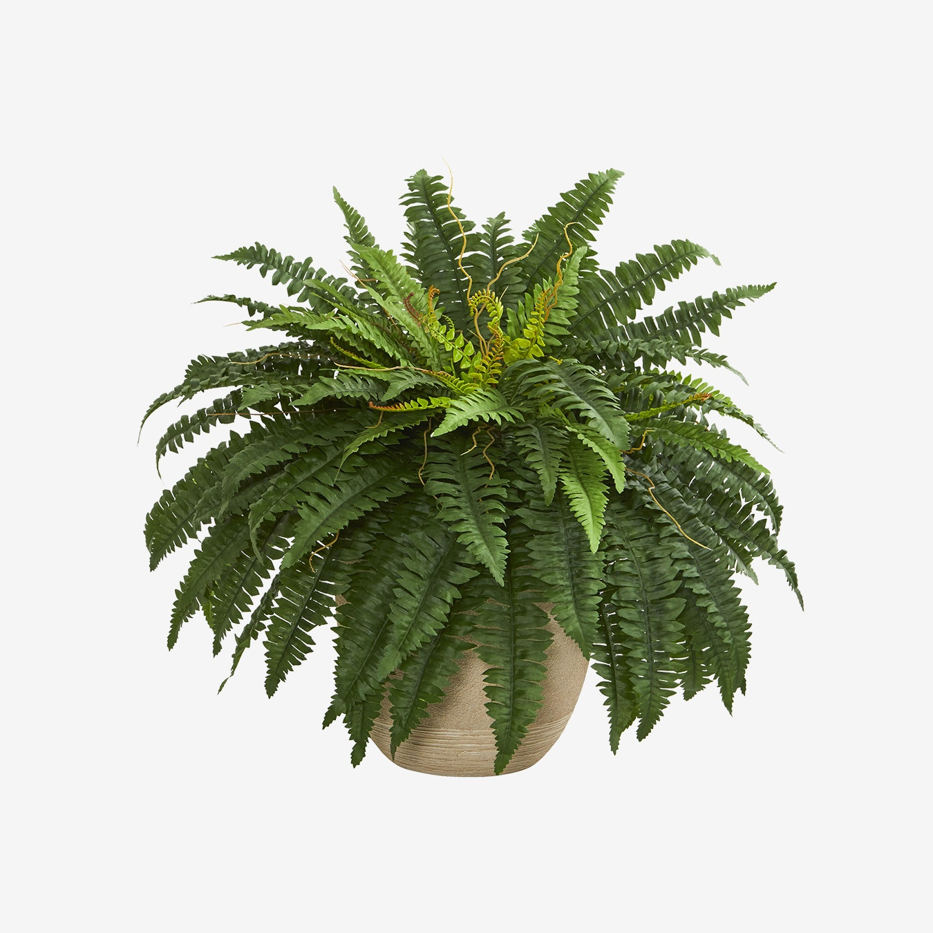 Boston Fern Artificial Plant In Sandstone Planter Green By Faux Foliage From Fy Fy