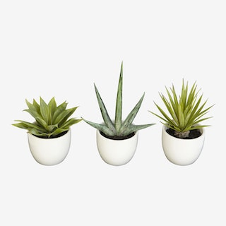 Southwest Plants - Green - Set of 3