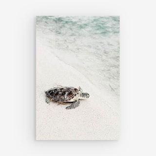 Palladian Moroccan Canvas Prints - Turtle