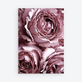 Amor Rose Canvas Prints - Mauve Rose